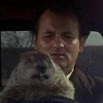 Murray con marmotta